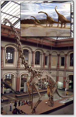 Скелет брахиозавра (Brachiosaurus brancai) в Берлинском музее гумбольдского университета.